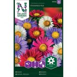 Aster - Chinensis Mix